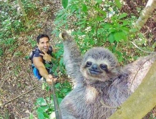 Funny Sloth Photo