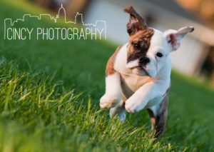 Cincinnati Pet photography