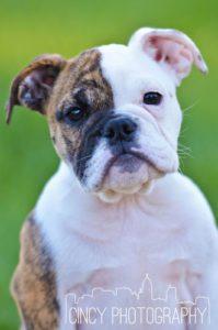 Cincinnati Pet Photos